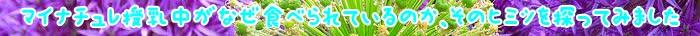 マイナチュレ,妊娠中,育毛剤,授乳,効果,髪,抜け毛,使用,頭皮,女性,産後,成分,薄毛,育毛,マイナチュレサプリ,赤ちゃん,髪の毛,ヶ月,口コミ,必要,白髪染め,半年,場合,安心,栄養,おすすめ,剤,女性用,シャンプー,妊娠,栄養素,刺激,肌,配合,理由,相談,ママ,健康,市販,心配,改善,購入,実感,ホルモン,体験,ハゲ,原因,副作用,生え際,酵素,